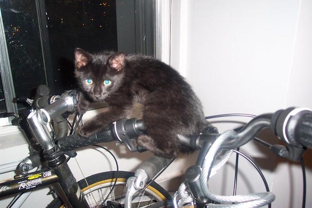 Cat on a bike 2