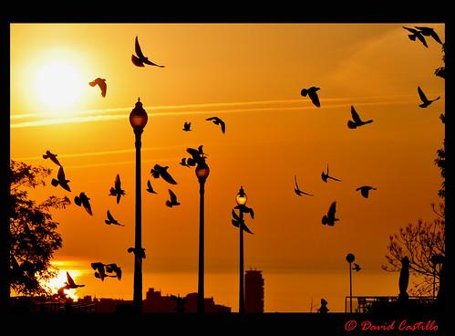 sunrise amanecer miramar montjuich aan davidcastillo