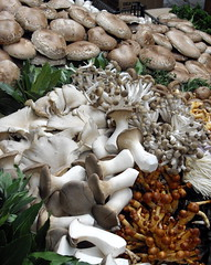 flower(0.0), hen-of-the-wood(0.0), autumn(0.0), pleurotus eryngii(1.0), medicinal mushroom(1.0), oyster mushroom(1.0), mushroom(1.0), agaricaceae(1.0), matsutake(1.0), edible mushroom(1.0), shiitake(1.0),