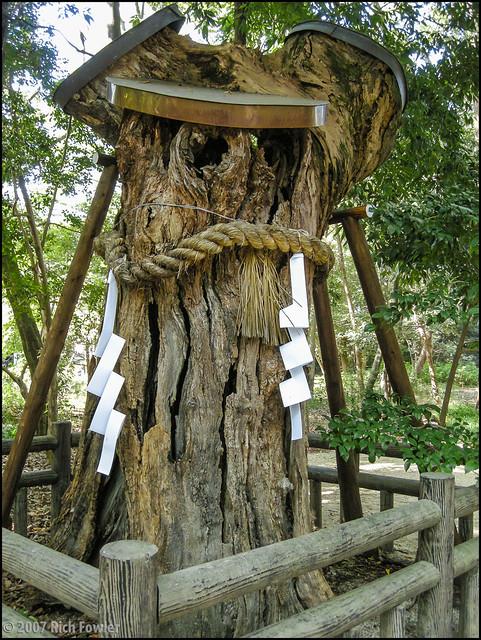Shimogamo Shrine Sacred Tree