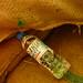 Small photo of rakia