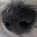 Small photo of Snurre's nose - closeup