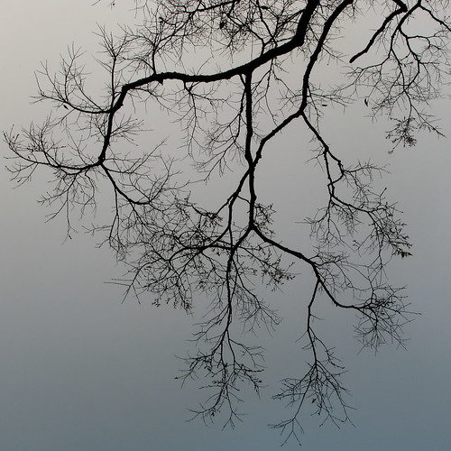 veins of mother nature?