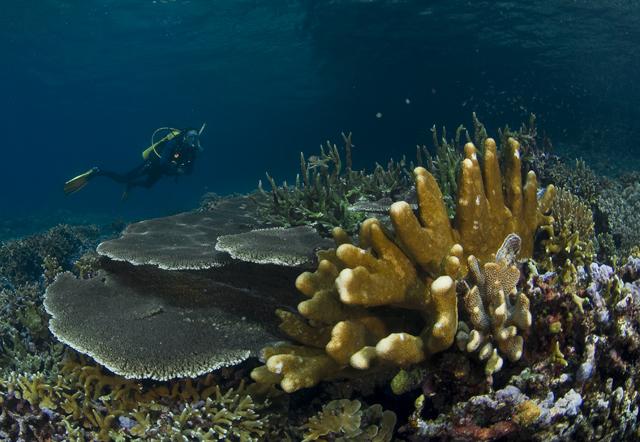 Coral Reef, Gorontalo