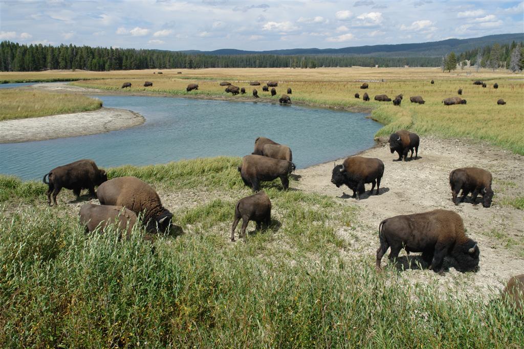Pradera de Bisontes (Entrada Este) parque nacional yellowstone - 3421135016 f0b3d6dde2 o - Parque Nacional Yellowstone, cómo visitarlo en dos días