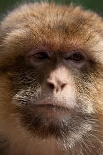 Monkey-9433