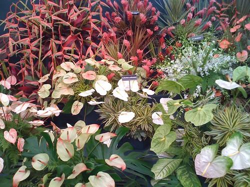 Chelsea Flower Show, London 2009