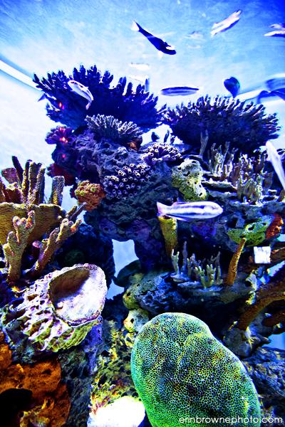 More Ripley S Aquarium Of The Smokies Photos Brownie
