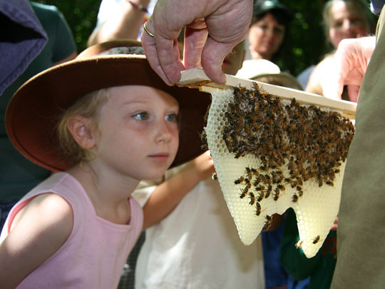 Honeybee Lives (Photo by Grai St. Clair Rice)