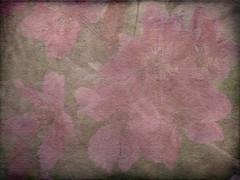 Cherry Blossom Textured 2