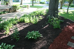 backyard, shrub, garden, soil, tree, plant, yard, mulch, landscaping, lawn, walkway,