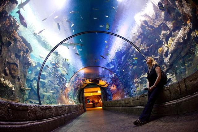 Aquarium Las Vegas Silverton Aquarium Las Vegas Aquarium