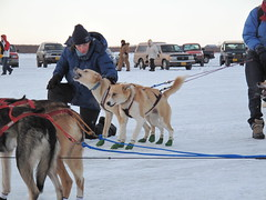 animal, dog, vehicle, pet, mammal, mushing, sled dog racing,