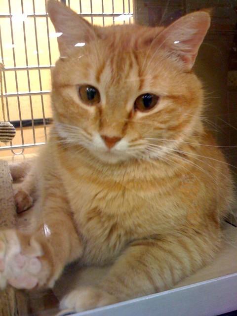 Petsmart Wet Cat Food