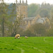 Sheep Grazing in front of Blockley Church