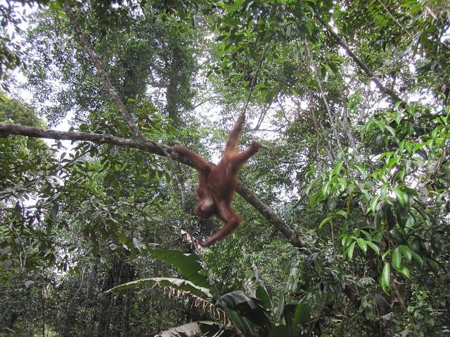 Borneo Dream Travel Tours Sdn Bhd