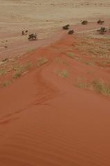 wadi(0.0), steppe(1.0), erg(1.0), soil(1.0), sand(1.0), plain(1.0), aeolian landform(1.0), natural environment(1.0), desert(1.0), dune(1.0), landscape(1.0),