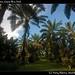 Robert's garden, Costa Rica (10)