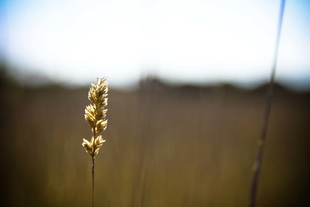 Healing from Flickr via Wylio