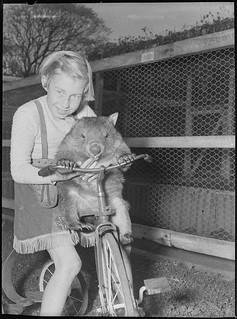 Cary Bay Zoo, Lake Macquarie, NSW, 1954 / Sam Hood
