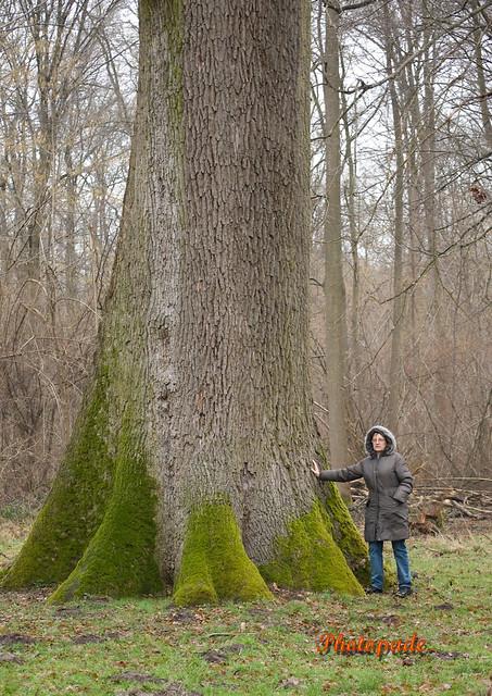 Forêt de picardie France