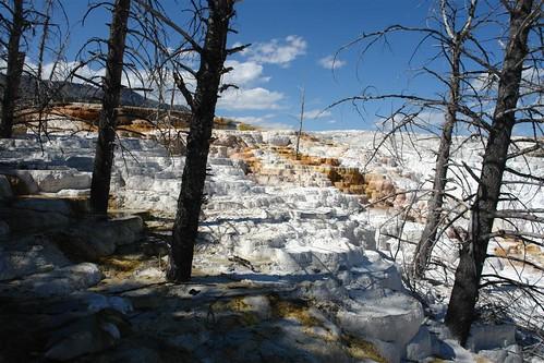 Parque Nacional Yellowstone: Mammoth Terraces parque nacional yellowstone - 3421155052 3d87f872f6 - Parque Nacional Yellowstone, cómo visitarlo en dos días