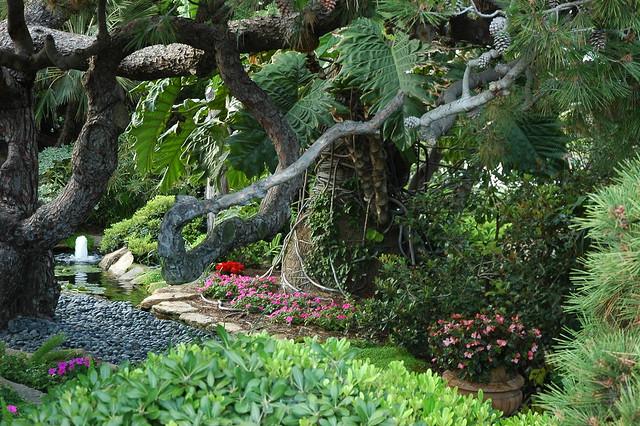 Old tree, pond, flowers, fountain, leafy plant, Meditation ...