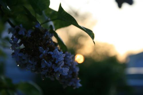 sunset flower rain poster