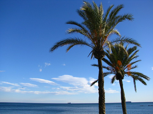Palm Trees and Mediterranean Sea, Malaga, Spain