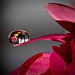 A Drop of Flowers II by jessi.bryan