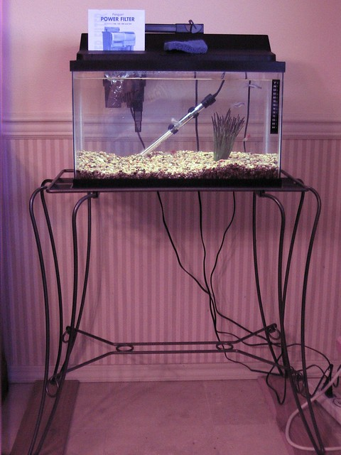 10 gallon tank and stand flickr photo sharing for Fish tank stand 10 gallon