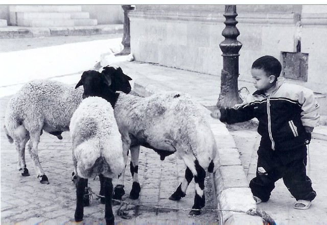 220 Coptic - boy and sheep BW