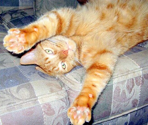 Declawing Cats Humane Alternatives to Declawing Cats
