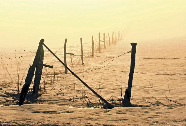 Sunlit Fog