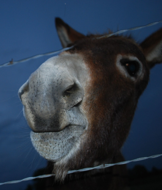 funny donkey faces - photo #12