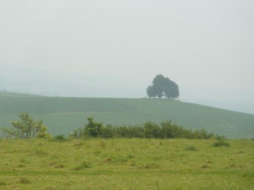Far tree