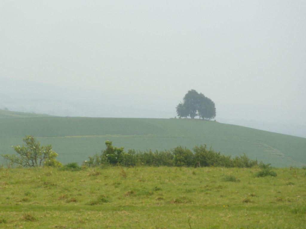 Far tree Appleford Circular