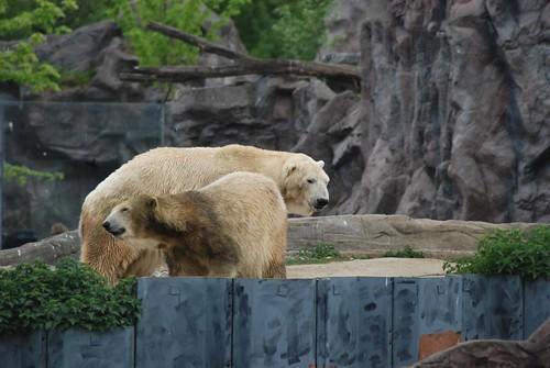 Eisbären Elvis und Fanny in der Zoom Erlebniswelt in Gelsenkirchen