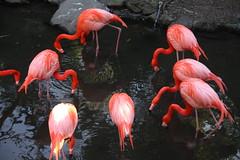 ibis(0.0), animal(1.0), zoo(1.0), fauna(1.0), beak(1.0), flamingo(1.0), bird(1.0),
