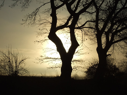 trees silhouettes in the morning