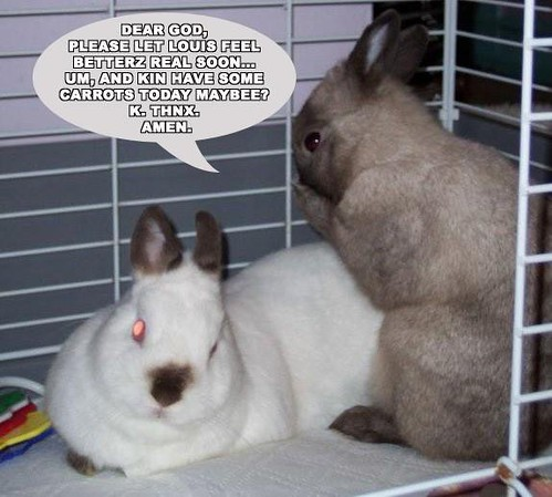 brown dwarf baby rabbits - photo #38
