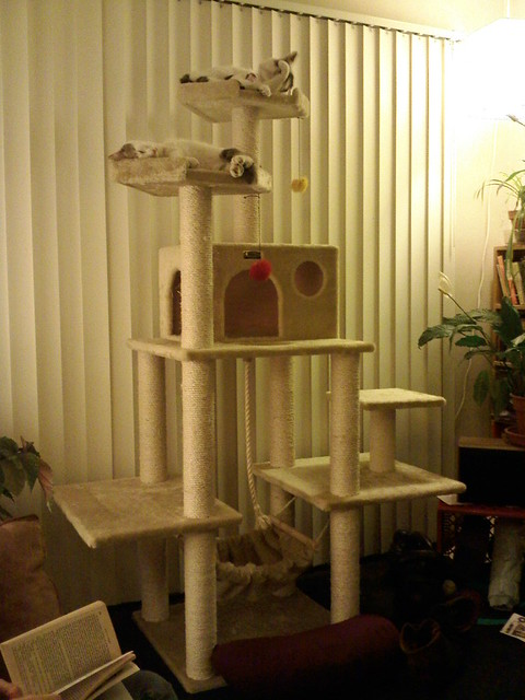 Best cat tree evar flickr photo sharing for Build your own cat scratch tower
