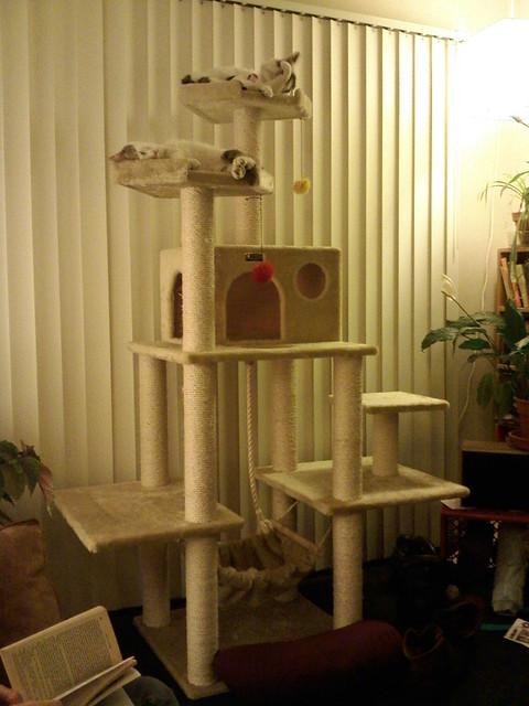 Large Cat Trees Amazon Uk