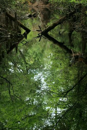 Sopchoppy River