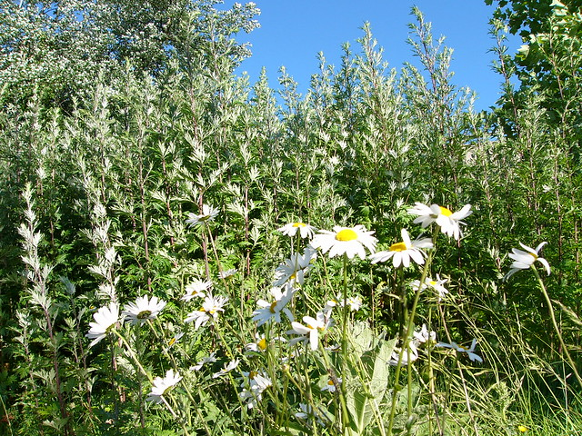 Header of herbes