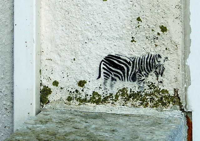 Zebra graffiti