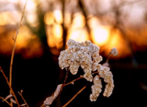 sunset sun color weed platinumphoto impressedbeauty citrit goldstaraward 100commentgroup