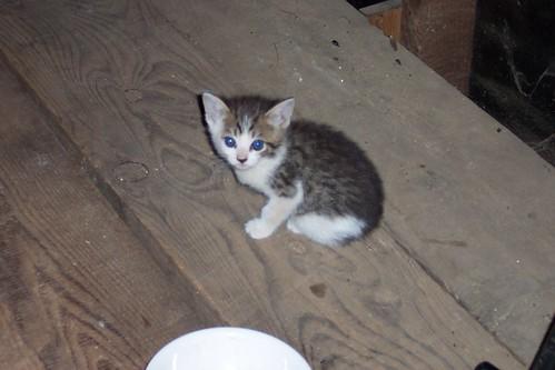 kitten names