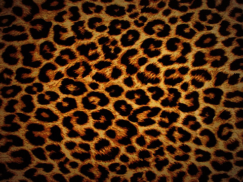 Wallpaper Image on Leopard Bb 8900 Wallpaper      Flickr   Photo Sharing
