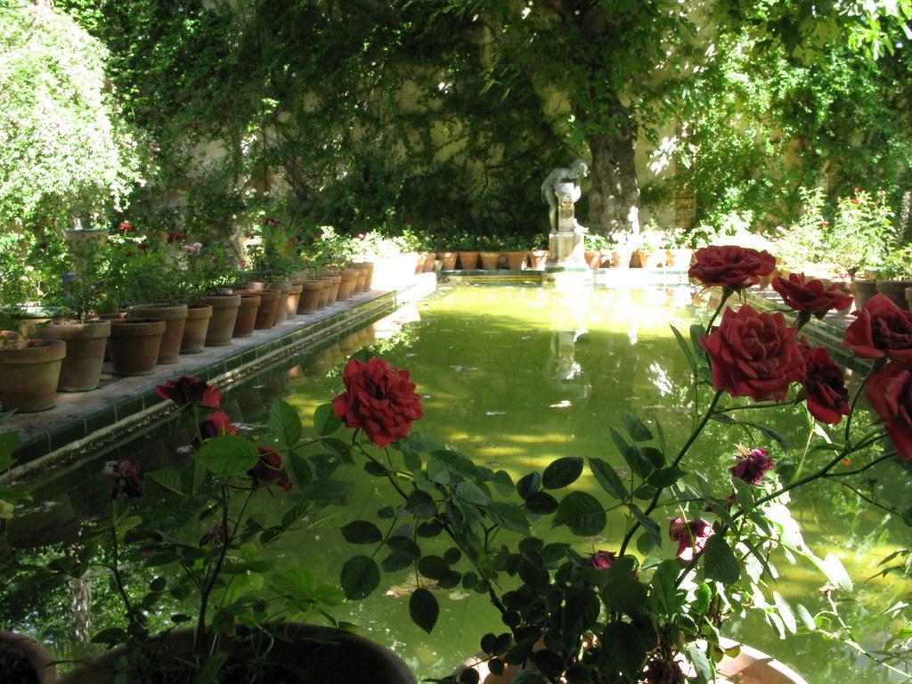 Rosas en el estanque.
